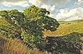 Tree by the Yarrow - geograph.org.uk - 1322191.jpg