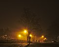 Tree outside of Gare de Boitsfort on a foggy morning in December (Belgium).jpg