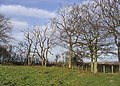Trees at Glebe Hill - geograph.org.uk - 312596.jpg