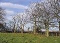 Trees at Glebe Hill - geograph.org.uk - 312596.jpg