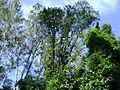 Trepadeiras e árvores.jpg