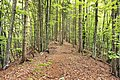Triglav National Park - trail 2.jpg