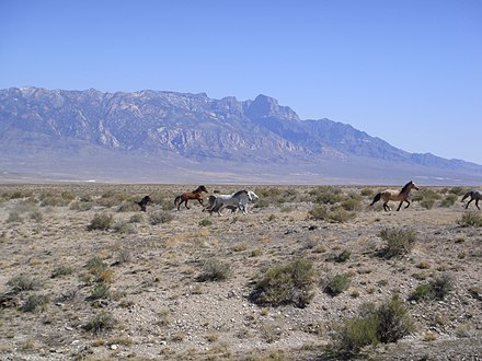 The Tule Valley watershed and the House Range (Notch Peak) are part of the Great Basin's Great Salt Lake hydrologic unit TuleHorses.JPG