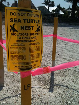Wildlife conservation - The marking off of a sea turtle nest. Anna Maria, FL.  2012.