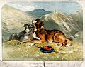 Two sheepdogs resting in the mountains next to a bag and a w Wellcome V0021846.jpg