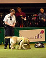 Tyke shows off his skills at Crufts (5330578694).jpg