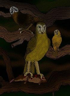 <i>Tyto gigantea</i>