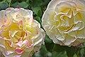 US-CA-Sacramento-GardenFlower-2012-04-18T13-22-46.jpg