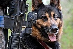 http://upload.wikimedia.org/wikipedia/commons/thumb/c/cc/USAF_War_dog.jpg/250px-USAF_War_dog.jpg