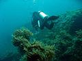 USAT Liberty Wreck Dive.jpg