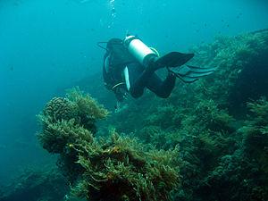 Tulamben -  Scuba diving along the USAT Liberty wreck in Tulamben Bali, Indonesia.