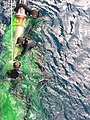 US Navy 050331-N-0000H-001 Navy Search and Rescue swimmers assigned to guided-missile cruiser USS Antietam rig a recoverable exercise torpedo while still in the water.jpg