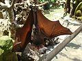 Ubud Monkey Forest Bali22.jpg