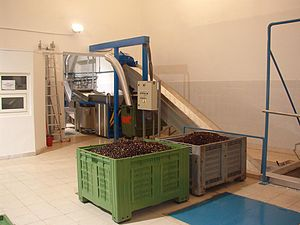 Cooking oil - Olive oil production in Croatia