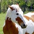 Urban Horse.jpg