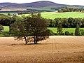 View from Craigievar Castle - geograph.org.uk - 605265.jpg