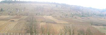 Vignoble de Saint-Aubin 3.JPG
