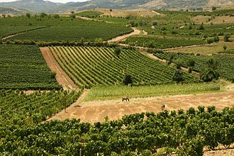 Kavadarci - Vineyards near Kavadarci