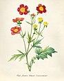Vintage Flower illustration by Pierre-Joseph Redouté, digitally enhanced by rawpixel 37.jpg