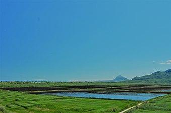 Vistes des de la Muntanyeta verda, Marjal Pego-Oliva.jpg