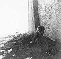 Vogels, nesten, kerkuil, Bestanddeelnr 193-0910.jpg