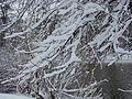 WIELKANOC 13r. Park w bajecznej zimowej szacie ,-)) 7 - panoramio.jpg