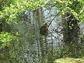 Wapanocca National Wildlife Refuge Crittenden County AR 030.jpg