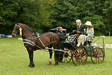 A Section D Welsh Cob carriage, harness show.