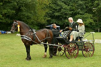Driving (horse) - A Welsh Cob in harness