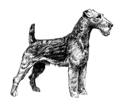 Welsh Terrier (PSF).png