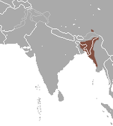 Western Hoolock Gibbon area.png