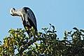 Western Serengeti 2012 06 03 3722 (7557814100).jpg