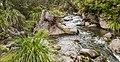 Whakapapanui Stream 04.jpg