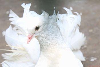 White feather bird.jpg