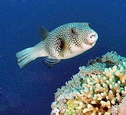 fiskearter i verden