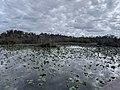 Wider water view of Everglades.jpg
