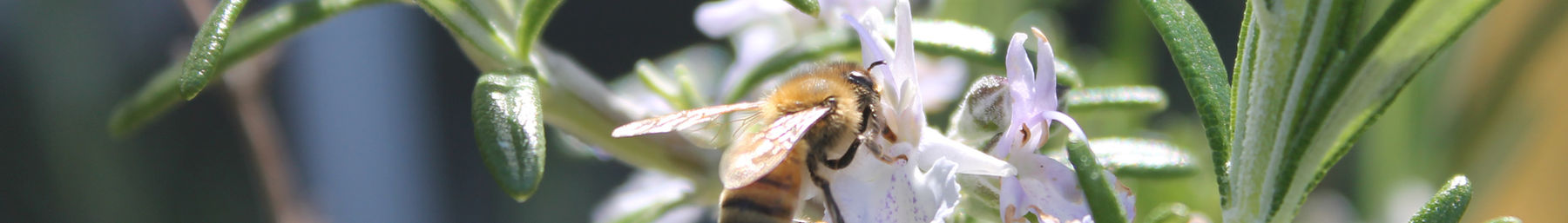 Wikivoyage page banner bee.jpg