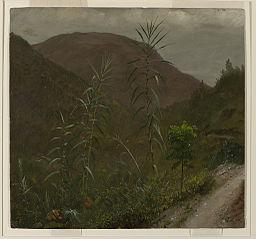 Wild Sugar Cane, Jamaica