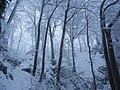Winterwald im Biosphärengebiet Schwäbische Alb.jpg