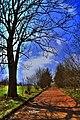 Wiosna na skróty - panoramio.jpg