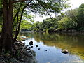 Withlacoochee River near GA31 bridge.JPG