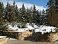 Wohl rose garden snow.JPG