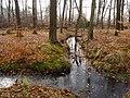 Wolbecker Tiergarten (15).JPG