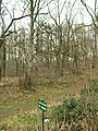 Wood (Plantation) off Newfield Lane - geograph.org.uk - 126485.jpg