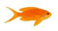XRF-Pseudanthias squamipinnis.png