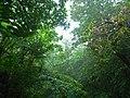 Yambaru Oldest Forest (tata aka T).jpg