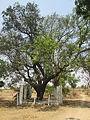 Yellamma Templee J.Lingaupr.jpg