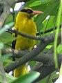 Yellow Friend (17093011287).jpg