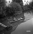 Z njive peljejo buče domov s čolni, Kostanjevica 1956.jpg