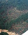 Zerstoerter Wald Erndtebrueck.jpg